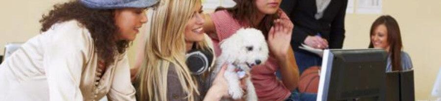Partir au travail avec son chien ou son chat, lumière sur la tendance des bureaux « Pet Friendly »