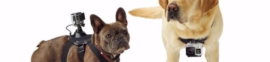 Noël arrive : Le top 5 des objets connectés pour vos animaux