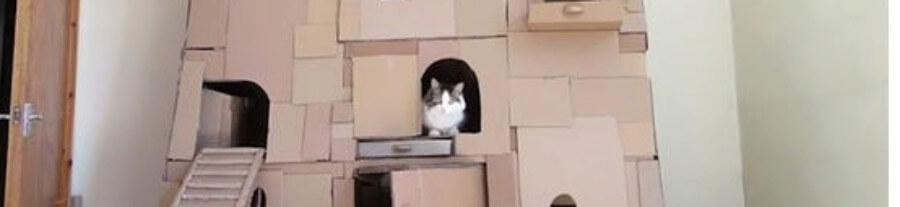 Et si votre chat devenait le roi de la maison !