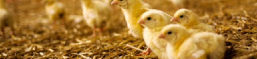 Les mentalités changent, les formations aussi : Nouvelle formation sur le bien-être animal !