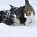 5 conseils pour protéger vos animaux du froid