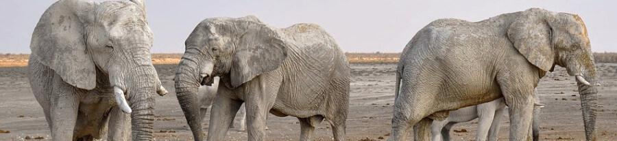 Le commerce d'ivoire interdit en Chine d'ici fin 2017