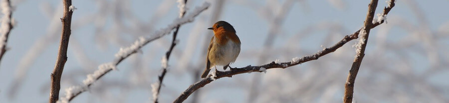Nourrir les oiseaux de votre jardin en hiver