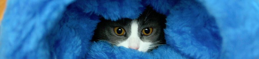 Tunnel pour chat: comment le choisir ?
