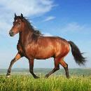 Les chevaux savent demander de l'aide