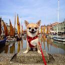 [Semaine du Chihuahua] Notre Top 7 des Buzz avec Chihuahua en vedette