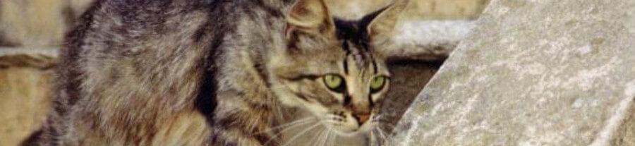 Une Albertvilloise lègue 300 000 euros … aux chats errants de sa ville
