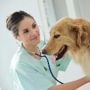 La toux de chenil : pourquoi faut-il vacciner votre chien ?