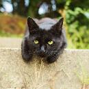13 raisons d'adopter un chat noir