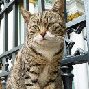 En Russie, les chats sont gardiens de musée !