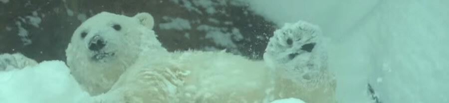 VIDEO - Quand les animaux du zoo de Portland rencontrent la neige