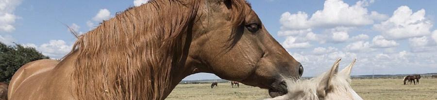 La robe du cheval