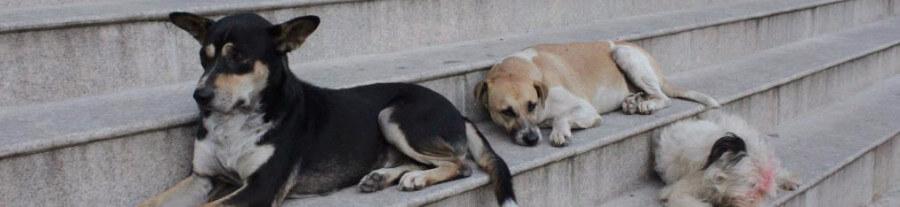 Des magasins turcs logent des chiens errants