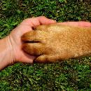 Un chien attend patiemment le retour de son maître … mort dans un attentat