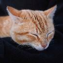 Pourquoi mon chat dort sur moi ?