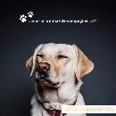Une start-up vous propose de louer votre animal de compagnie !