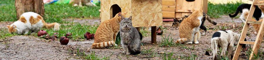 Un village de chats ouvre ses portes en Turquie