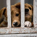 SPA : record d'adoption d'animaux en 2016