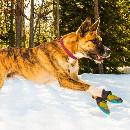 Chaussures et chaussons pour chien