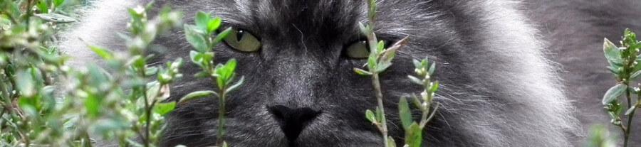 Un chat addict à l'herbe à chat fugue de chez lui et perd le contrôle dans une animalerie…