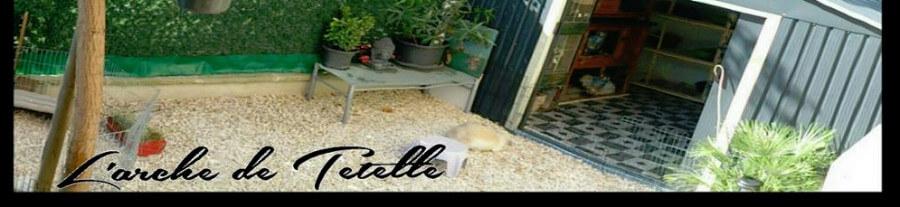 Témoignage: L'Arche de Tetelle, élevage de lapin bélier angora