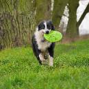 Jouet Frisbee pour chien : prix et conseils d'utilisation