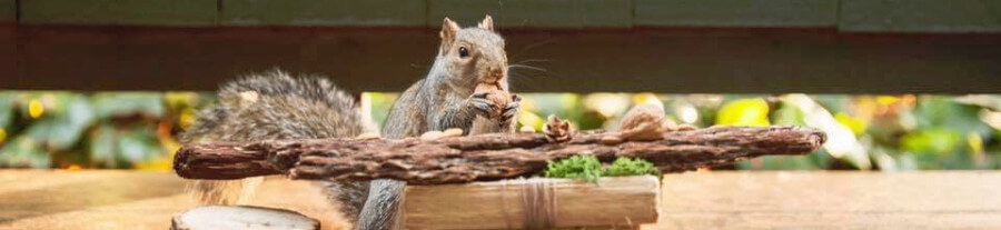 Une femme crée des scènes pour les écureuils sauvages
