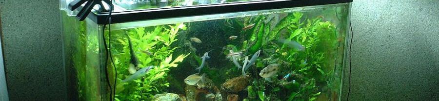 L'éclairage dans les aquariums