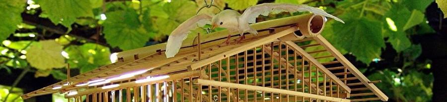 Choisir une cage pour un oiseau de compagnie