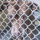 San Francisco interdit la vente de chats et chiens en animalerie