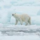 27 février, journée internationale de l'ours polaire