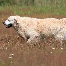 Que faire quand mon chien perd ses poils ?