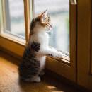 Que faire quand son chat est malheureux ?