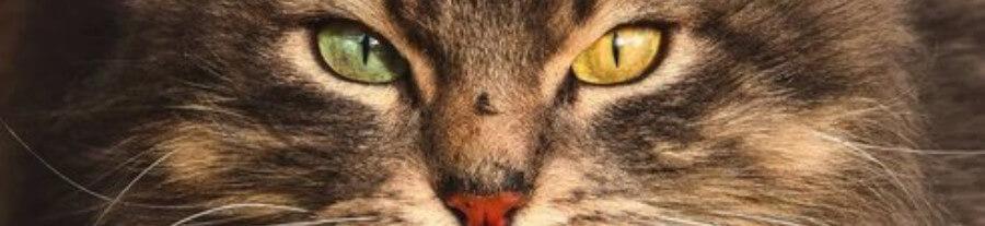 11 magnifiques portraits de chats de gouttière faits par un photographe lituanien