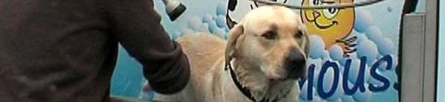 Lavage pour chien en libre-service