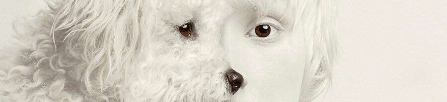 Animeyed : étranges autoportraits de Flora Borsi fusionnés avec les animaux