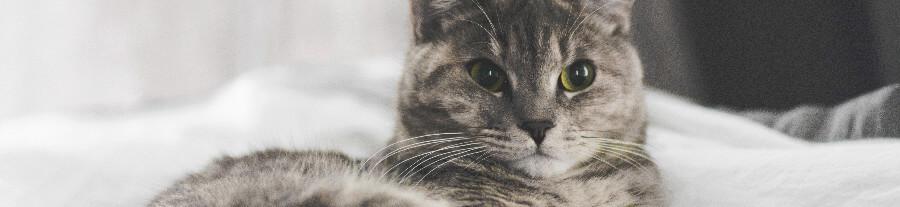 Une étude pour mieux comprendre le comportement de votre chat