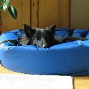 Panier pour chien : assurer le bon couchage pour son chien