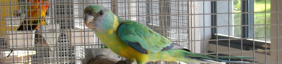 Comment nettoyer une cage ou volière à oiseau ?