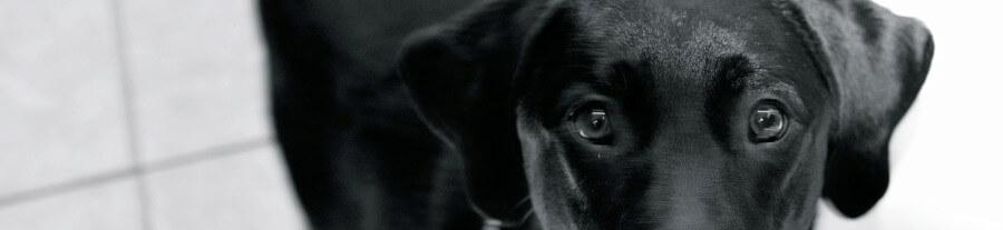 La Journée Mondiale des Animaux en Laboratoire