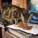 Tout savoir sur les croquettes pour chat sans céréales