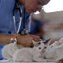Prévention des maladies du chat