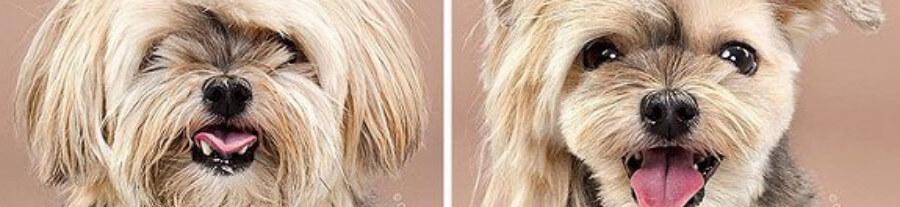 Ces 10 chiens se sont faits beaux, surement pour le festival de Cannes