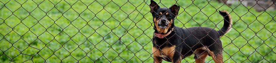Mon chien fugue : guide pour le maître d'un chien fugueur