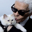 Choupette, la minette égérie publicitaire de Karl Lagerfeld