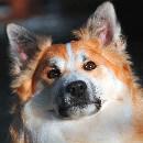 Prévenir les maladies et surveiller la santé de son chien