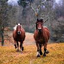 Maladies chez le cheval: symptômes et traitement