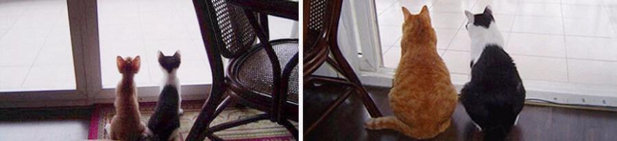 10 chatons qui ont gardé leurs habitudes une fois grands