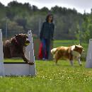 Les races de chiens sportifs