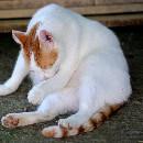 Les boules de poils chez le chat: prévention et solutions